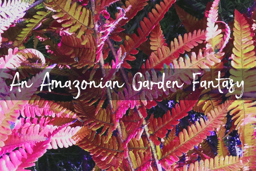 An Amazonian Garden Fantasy