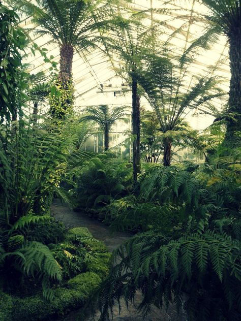glasshouse with giant palm trees