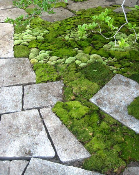 mounds of moss on the ground