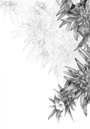 graphite plant drawing by Shelley Steer