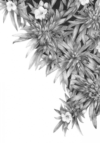analytical pencil drawing of flowers by Shelley Steer