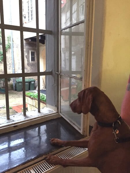 dog looking out of window at Museum of Broken relationships