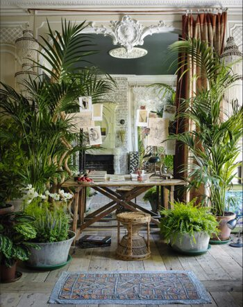 Jungle like plants in an interior with bamboo furniture and tribal rugs