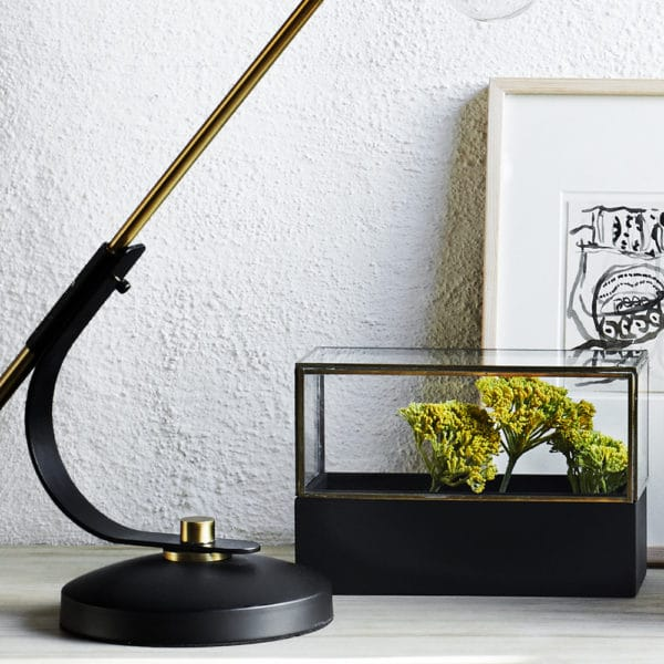 glass display case with small tree inside